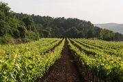 A szőlőben tett rövid séta végeztével finom falatok várják a túrázókat