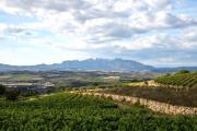 Sant Sadurní d'Anoia szőlőültetvényei, háttérben a Montserrat hegységgel